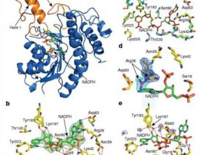 中国农科院程奇团队首次解析叶绿素合成关键酶三维结构