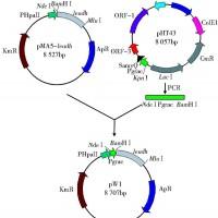 供应L-亮氨酸脱氢酶L-leucine Dehydrogenase (Crude Enzyme)